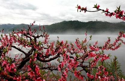 【黄河三峡桃花岛】安阳到济源:赏十里桃花观黄河壮