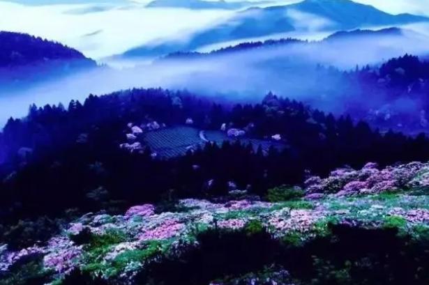 安阳到福州天台国清寺、华顶赏杜鹃、济公故居、紫阳
